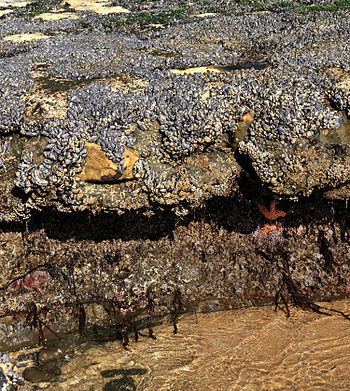Tidepools in Santa Cruz at low tide