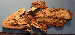 <i>Tiktaalik</i> Genus of extinct sarcopterygian (lobe-finned fish)
