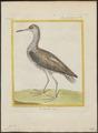 Totanus calidris - 1700-1880 - Print - Iconographia Zoologica - Special Collections University of Amsterdam - UBA01 IZ17400113.tif