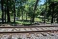 Tracks in Calvary Cemetery 02 - Connotton Valley Railway.jpg