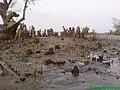 Tree-in Kuakata Bangladesh 2.jpg