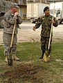 Tree planting for Afghan new year (4454147188).jpg