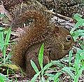 Tree squirrel on the ground retusche.jpg