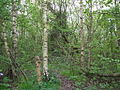 Trees at Springhead sidings site 2.jpg