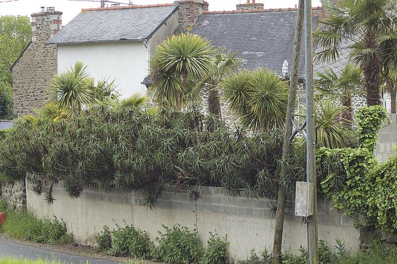 File:Treveneuc- Rue du Port-Goret.jpg