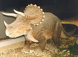 Triceratops model, Royal Belgian Institute of Natural Sciences, Brussels
