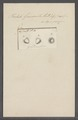 Trichoda grandinella - - Print - Iconographia Zoologica - Special Collections University of Amsterdam - UBAINV0274 113 15 0016.tif