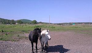 Reyneke Island - Image: Two Horses on Reyneke Island