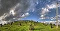 Uliveto - Castellarano (RE) Italia - 27 Ottobre 2013 - panoramio.jpg