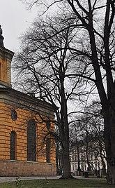 Fil:Ulmus 'Purpurea'. Hedvig Eleonora kyrka 2014 10.jpg