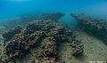 Underwater mediterranean landscape.jpg