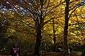 Urbasa-Andia Nature Park in Navarre 01.jpg