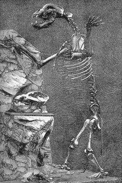 Kostur špiljskog medvjeda