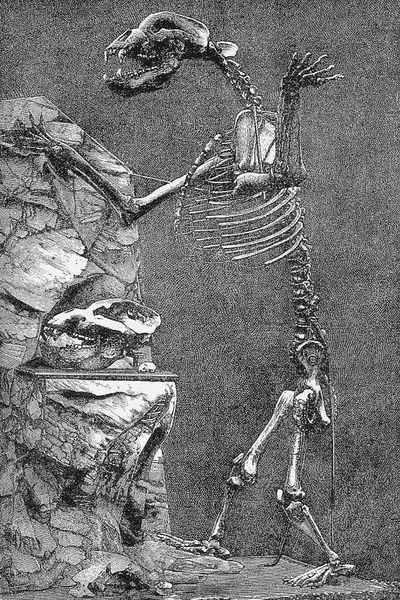 Soubor:Ursus-spelaeus Höhlenbär.jpg