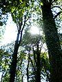 V Budatínskom hradnom parku - panoramio - Michal Jakubský.jpg