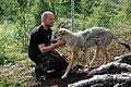 Varg fotograferad pa Polar Zoo Norge (16).jpg