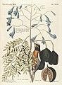 Verzameling van uitlandsche en zeldzaame vogelen (Tab. LXXXIV) (7894246854).jpg