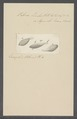 Vibrio linter - - Print - Iconographia Zoologica - Special Collections University of Amsterdam - UBAINV0274 113 11 0011.tif