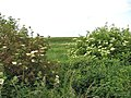 View across Fresh Marshes - geograph.org.uk - 841926.jpg