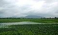 View near Yelamanchili.JPG