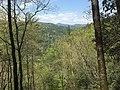 View of Ellicott Rock Wilderness.jpg