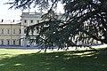 Villa Olmo - Cedro del Libano - parco.jpg