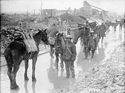 Vimy Ridge - Pack horses carrying ammunition.jpg