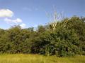 Vlakte van Waalsdorp (Waalsdorpervlakte) 2016-08-10 img. 525.png