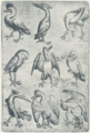 Vogel-Neun (Meister der Spielkarten).png