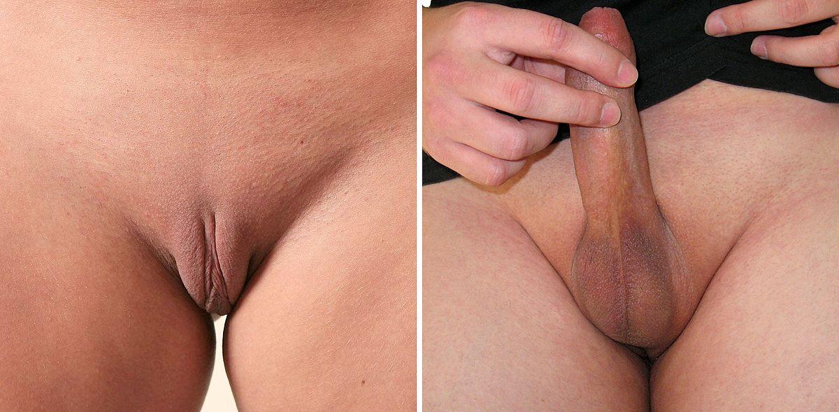 женский половой орган фото