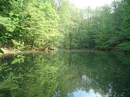 Das Naturdenkmal Waldmichelbacher See