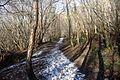 Walk through Church Stile wood. - Flickr - gailhampshire.jpg