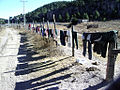 Washing drying on a barbed wire fence (5461966082).jpg