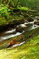 Water-Rocks-Seneca - West Virginia - ForestWander.jpg