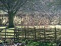 Weald and Downland Museum Singleton - geograph.org.uk - 1161507.jpg