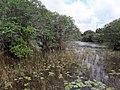 Wetland park 1.jpg