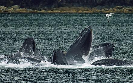 los delfines tienen pene
