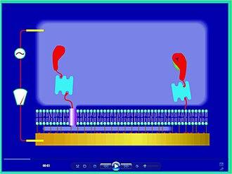 Biosensor - ICS – channel open