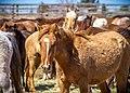 Wild Horse Corral Facility - Hines, Oregon (32603640562).jpg
