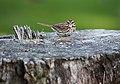 Wildlife birds 7 - West Virginia - ForestWander.jpg