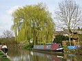 Willow by the Oxford Canal - geograph.org.uk - 1804426.jpg