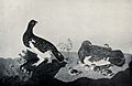Willow ptarmigan (Lagopus lagopus); male and female with chi Wellcome V0022125.jpg
