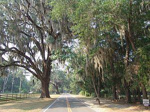 Windsor, Alachua County, Florida - The single main road in Windsor