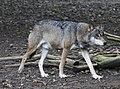 Wolf Tierpark Hellabrunn-7.jpg