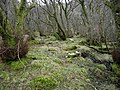 Woodland - geograph.org.uk - 157487.jpg
