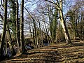 Woodland Footpath next to the River Burn - geograph.org.uk - 312498.jpg