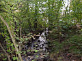 Woodland Stream - geograph.org.uk - 572767.jpg