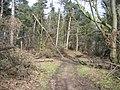 Woodland track at Gwysaney - geograph.org.uk - 736656.jpg