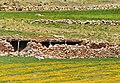 Yeşildere 05 2011 Viehstall.jpg