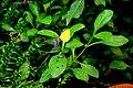 Yellow flower focus.jpg